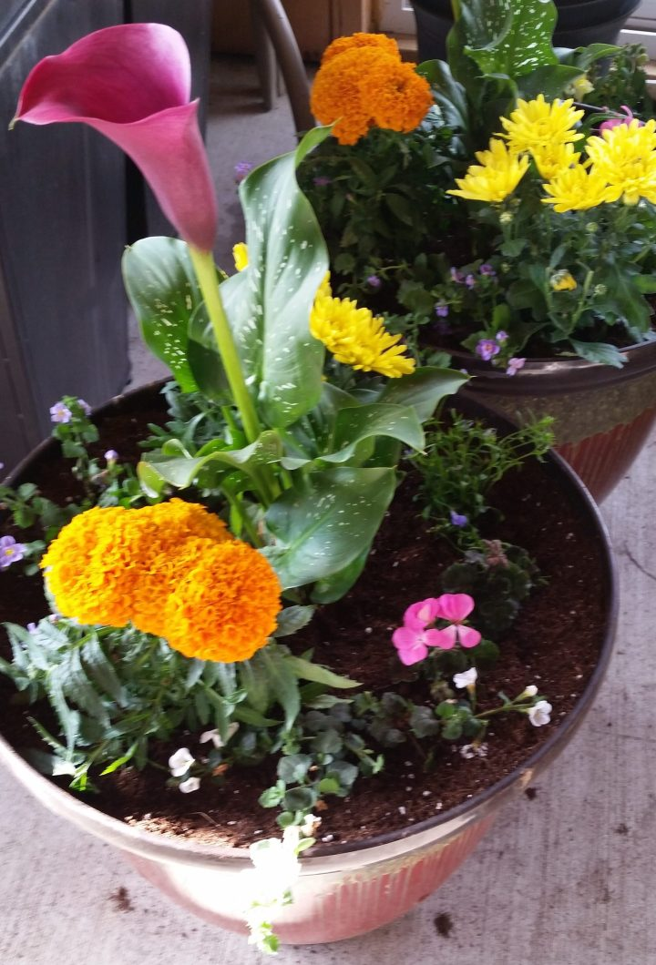 How To: Plant Your Own FlowerPots